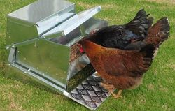 Grandpa's Feeders: Large Chicken Feeder