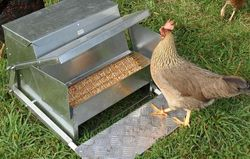 Grandpa's Feeders: Standard Chicken Feeder